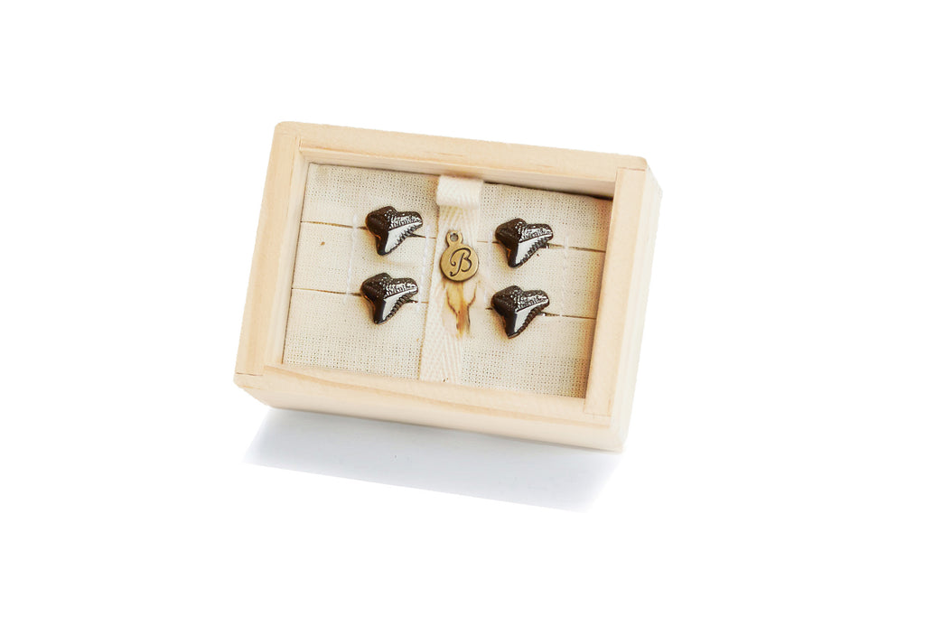 Antiqued Shark Tooth Tux Studs
