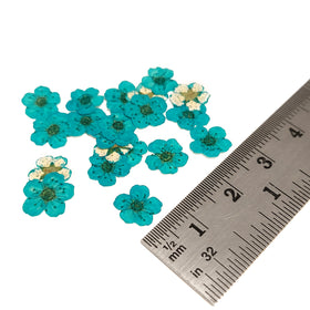 Mini Dried Flowers - Turquoise