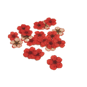 Mini Dried Flowers - Coral