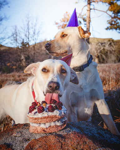 dogs celebrating a birthday