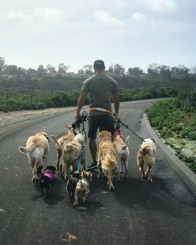 passionate dog walker - dog walks