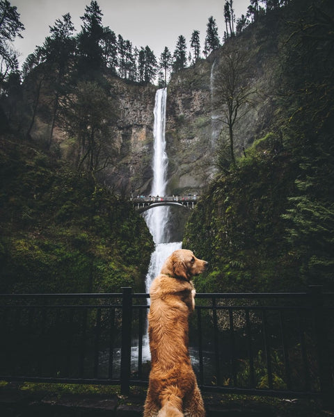 dog in front of a waterfall - dog blogs