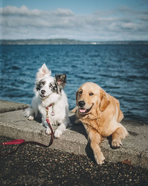 Dogs by the water - seattle waterfront park