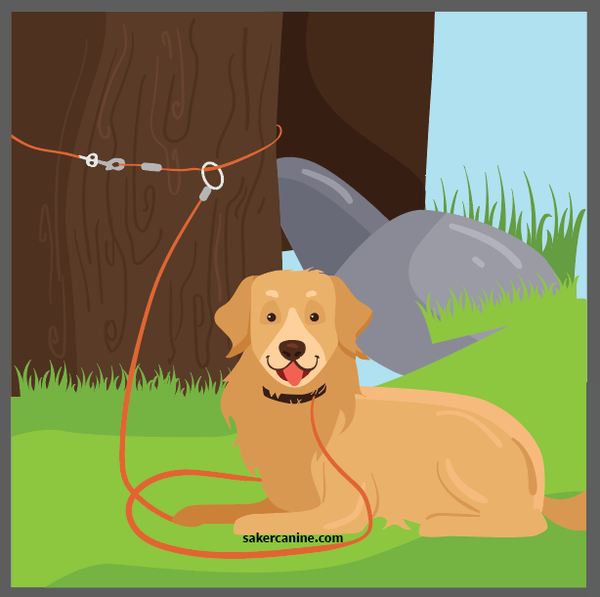 dog tied to a tree
