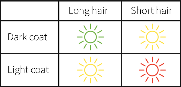 chart for dogs who are most prone to sunburns