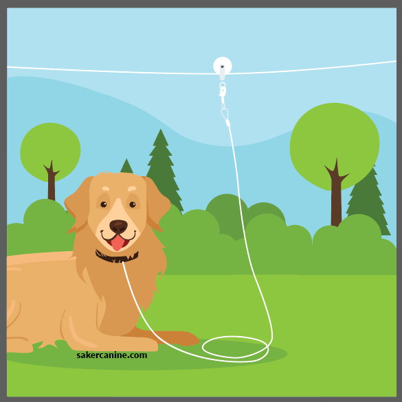 dog tied to a cable run