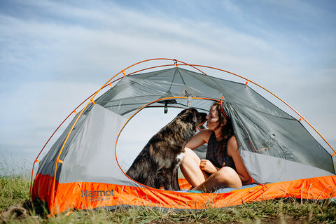 Dog and its owner camping. Perfect set-up with dog camping gear