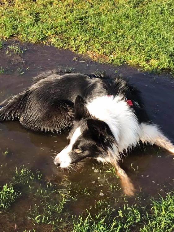 Why dogs love jumping and rolling around in mud