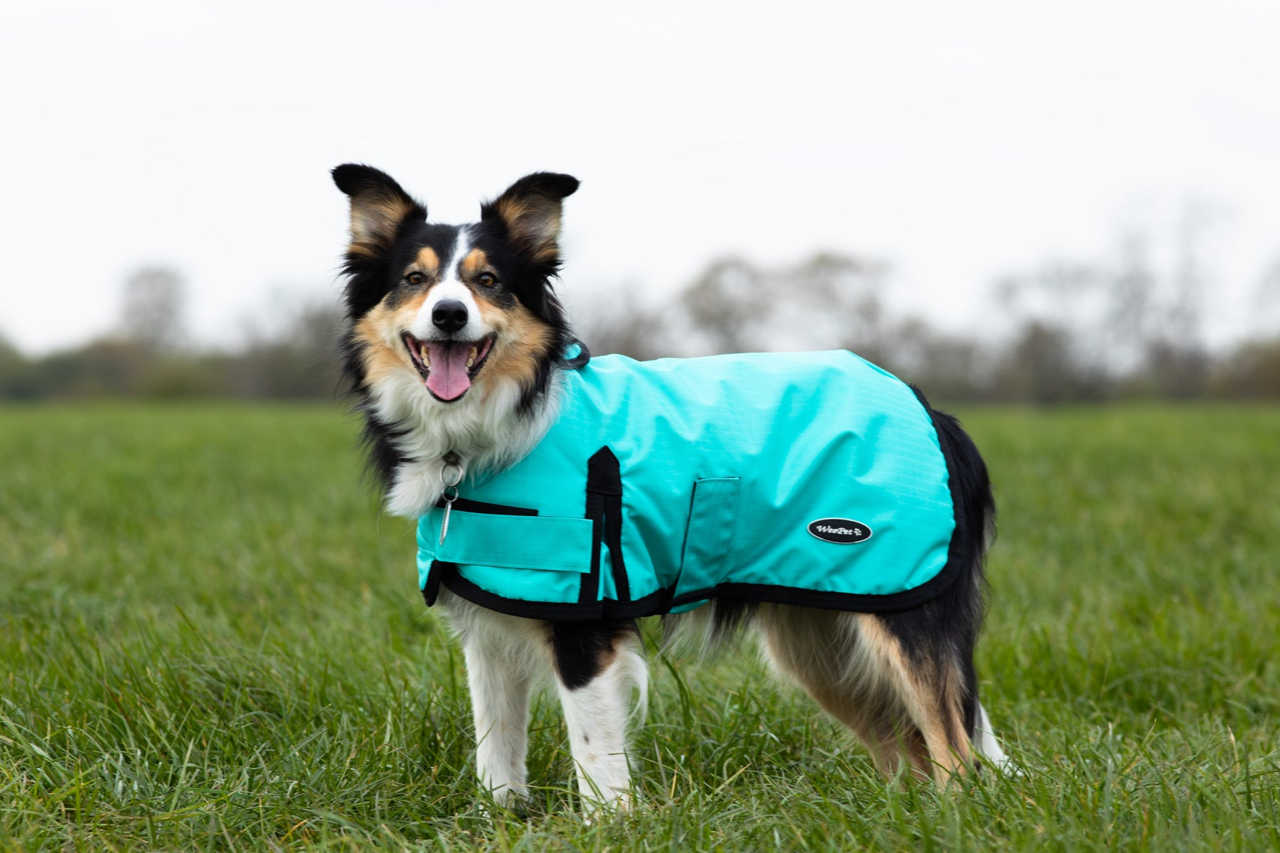 How to measure your dog for a dog coat, and a get a good fit!