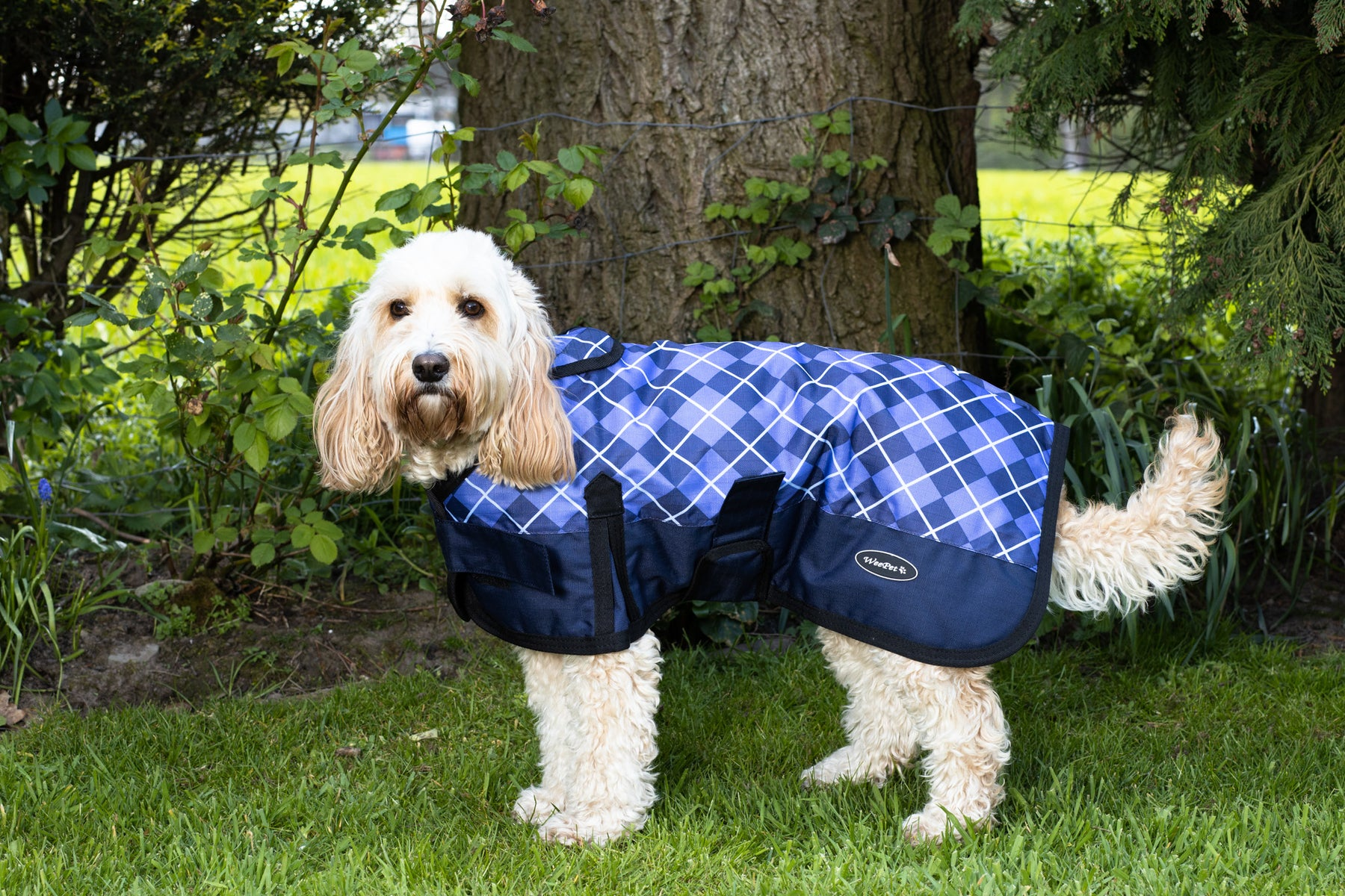 Does your dog need a dog coat?