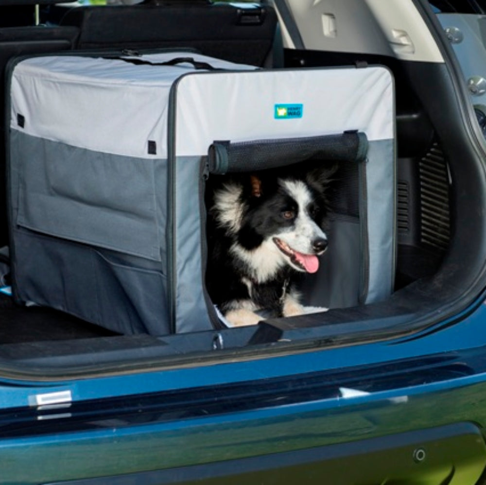 6 Essentials for summer travels with your dog