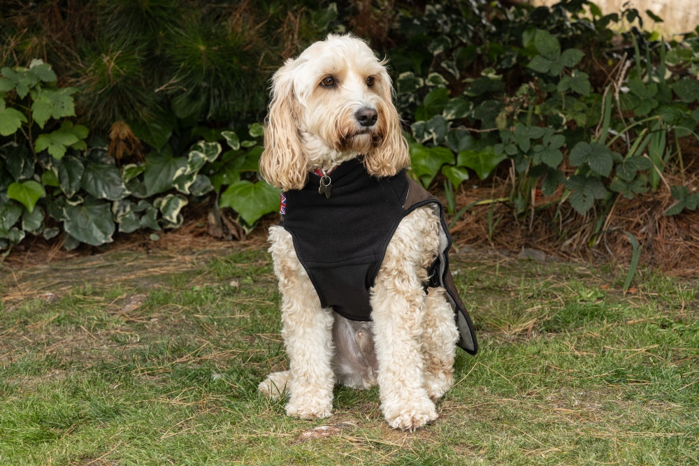 Looking for a Dog Coat that covers your dog's underbelly?