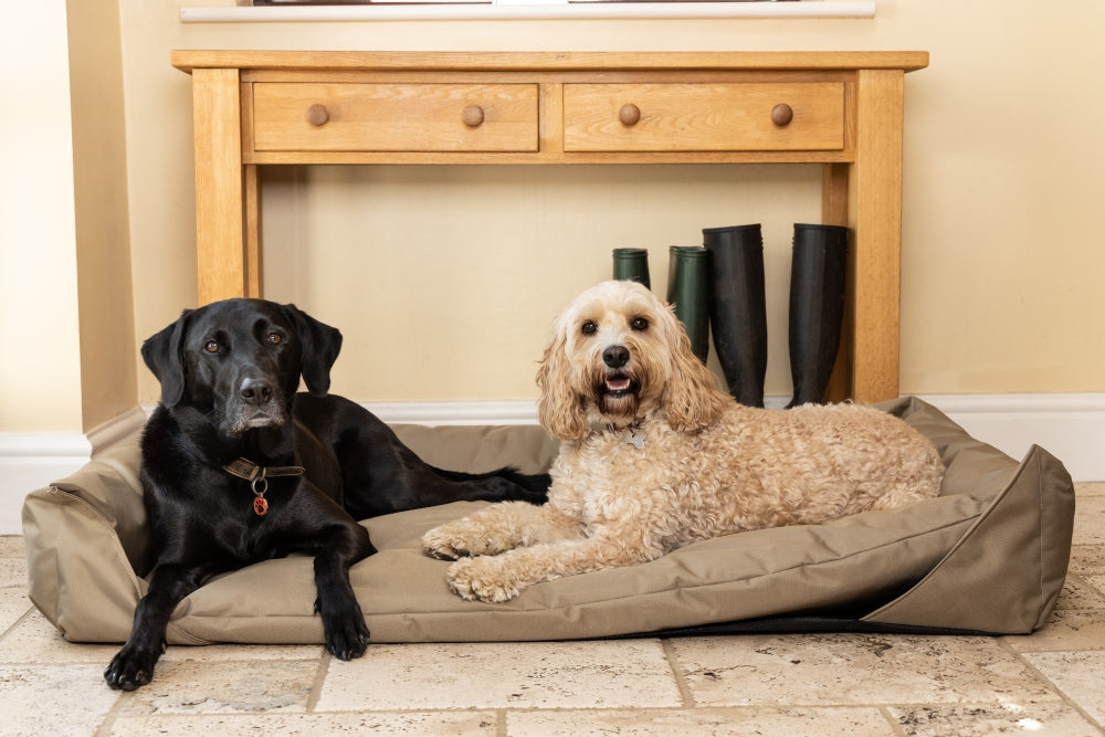 What to look for when choosing a new dog bed