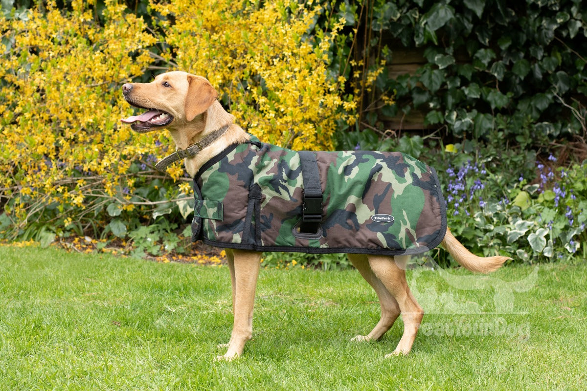 What type of dog coat is best for gun dog breeds?