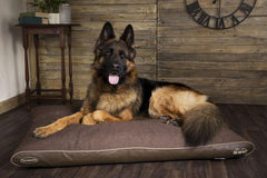 Comfortable Beds For Big Dogs