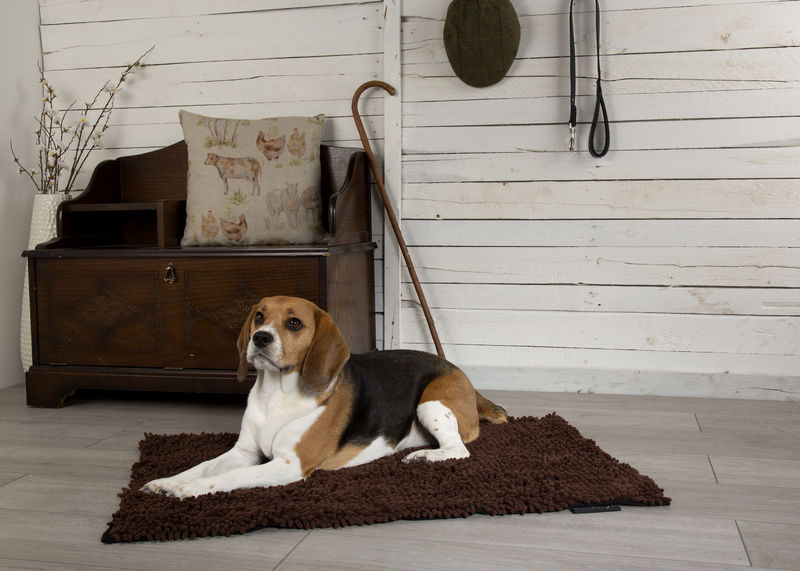 Noodle Dog Mat in Chocolate Brown
