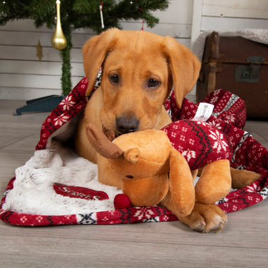 Scruffs Santa Paws Blanket & Reindeer Gift Set in Red