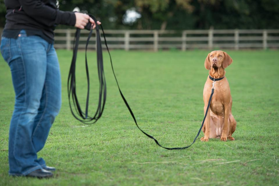 Recall Training Line for Dogs and Puppies
