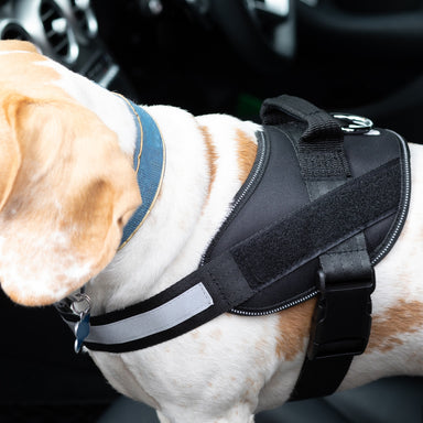 Strong/Car Dog Harness- Black