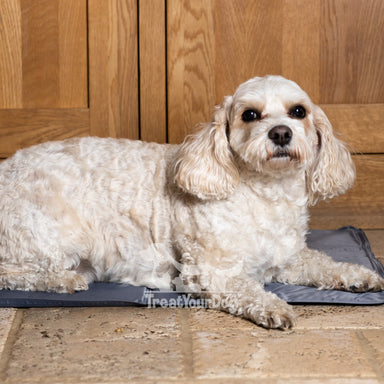 Pet Dog Cool Mat in Grey
