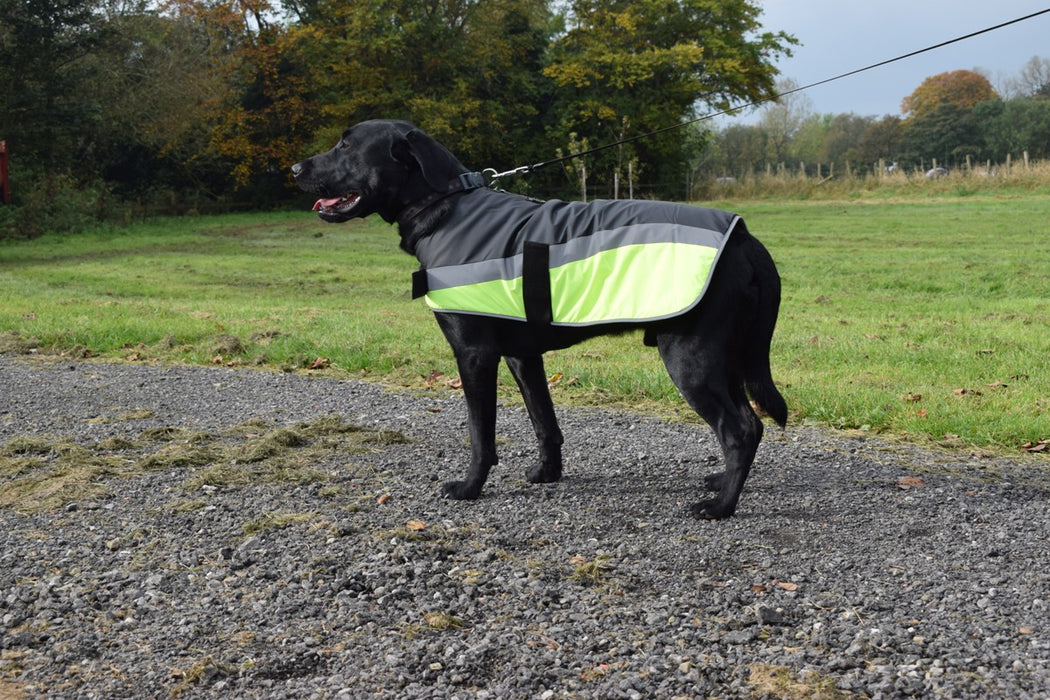 Go Walk High Vis Reflective Dog Coat in Yellow
