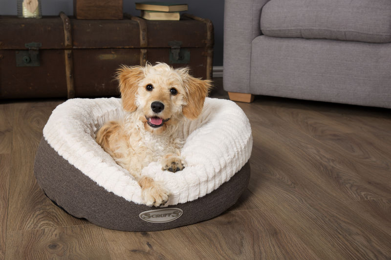 Ellen Soft Donut Dog Bed in Grey