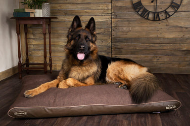 Scruffs Hilton Orthopaedic Memory Foam Dog Mattress Chocolate Brown