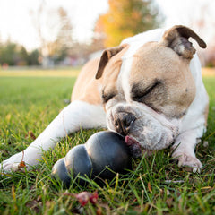 Toys To Keep Dog Busy When Left Alone