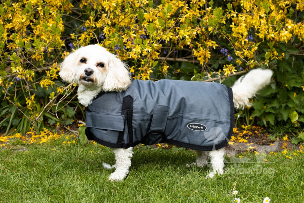 All Seasons Waterproof Dog Coat in Grey