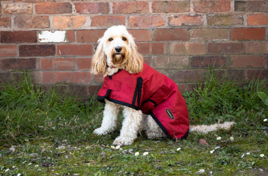 All Seasons Waterproof Dog Coat in Red