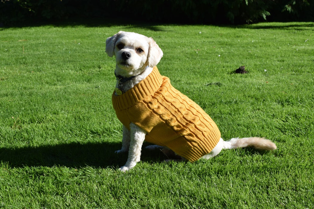 Buster & Beau Cable Knit Dog Jumper in Mustard