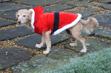 Santa Outfit for dogs