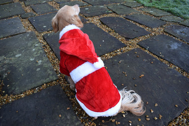 Christmas Dog Coat for Small Dogs & Puppies