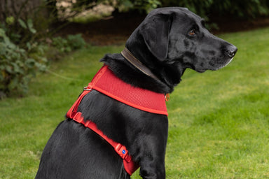 Comfort Harness/Car Harness for Dogs in Red