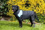 Dog coat with underbelly covered