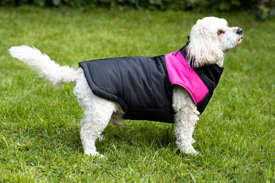Pink & Black Winter Body Warmer for dogs