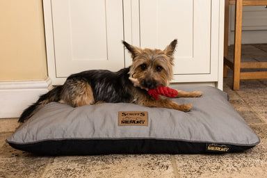 Scruffs Memory Foam Dog Bed - 90cm x 60cm