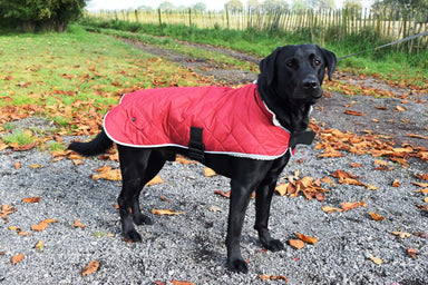 Go Walk Quilted Comfort Dog Coat in Cranberry