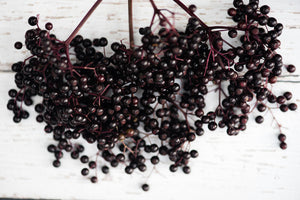 Beautiful Elderberries