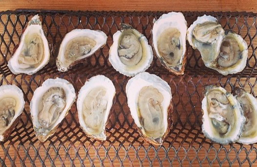 Shucked Oysters - per pint (16 oz. container) - LITTLE CREEK OYSTER FARM & MARKET