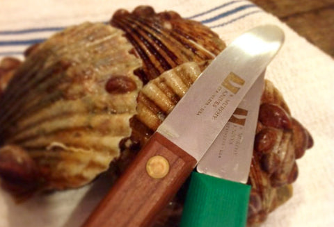Damn Good Scallop Knife - Wood Handle or Plastic