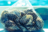 NYC / Brooklyn Residential Oyster Delivery (50 ct) - LITTLE CREEK OYSTER FARM & MARKET