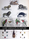 eBook 2000 Variants in Nature Illustrated Monthly