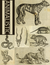 eBook Animalistic Illustrated Monthly