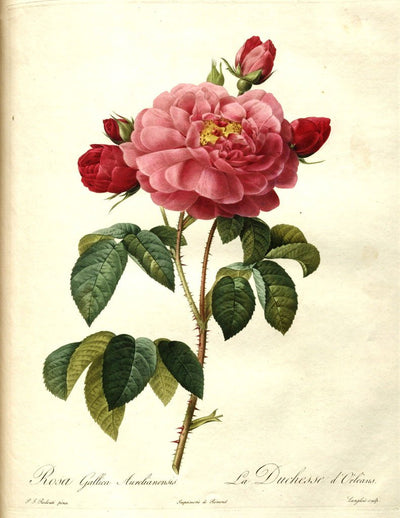 eBook Big Book of Roses Illustrated Monthly