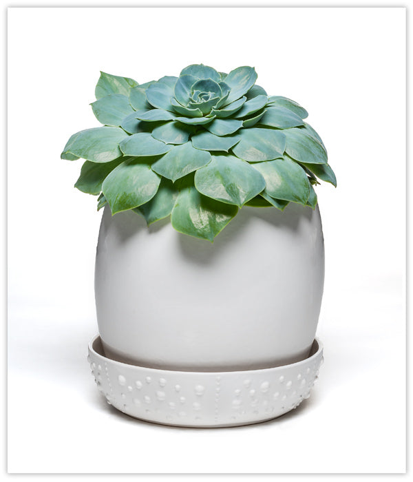 Low Tide Ceramic Planter