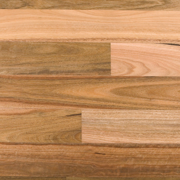 Spotted Gum Solid Strip Australian Species