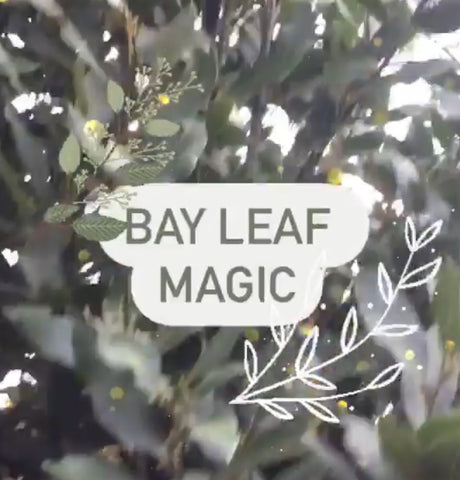 Bay Leaf Magic