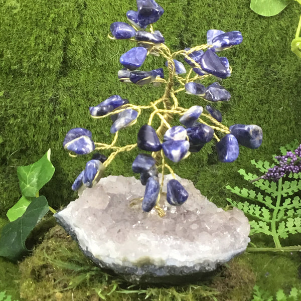 Crystals for Stress and Tension. SODALITE Tree of Life Calmness Tree