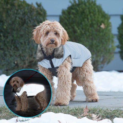 Dog Gone Smart Outerwear